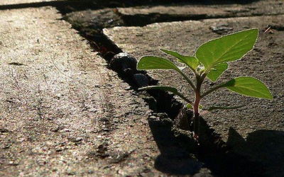 Marketers: Your Mission is Growth (by David Edelman)